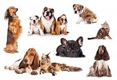 stock photo of hound dog  - Group of cats and dogs in front of white background - JPG