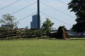 image of wind blown  - Fallen tree blown over by heavy winds at the park - JPG