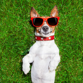 picture of crazy face  - super funny face dog lying on back on green grass looking crazy - JPG