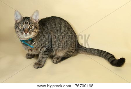 Tabby Kitten In Blue Collar Rests On Yellow