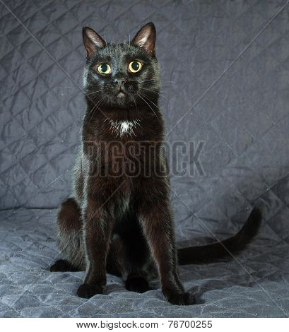 Black Cat Sitting On Quilted Bedspread