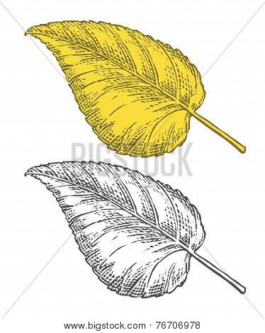 Autumn leaf in engraving style