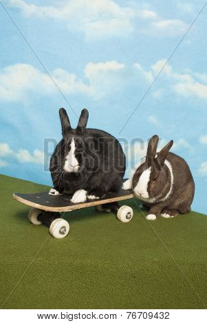 Bunny Team On A Skateboard