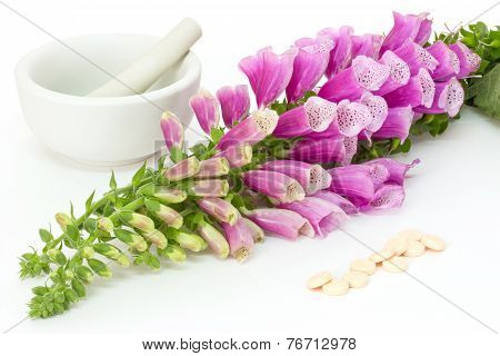 Foxglove With Cardiac Pills