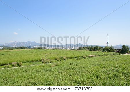 Seoul, Korea - August 30, 2014: Haneul Park In Seoul