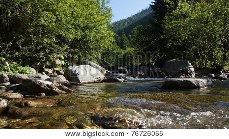Mountain Whirling Creek, Flowing Through A Coniferous Forest