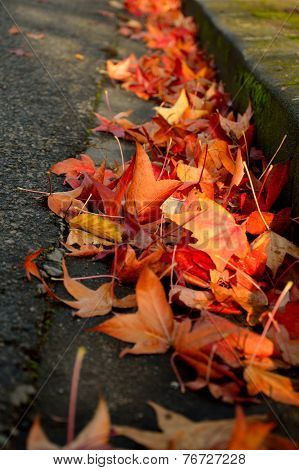 Street gutter full of autumn leaves