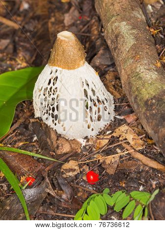 Beautiful Tropical Fungus