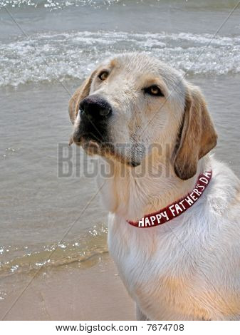 Dad's Dog