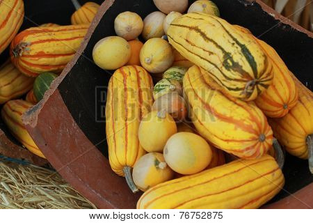 gourds in fall setting
