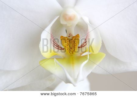 a close up of a white orchid