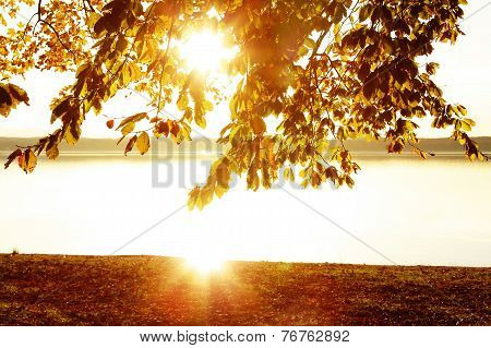 Lakeside Starnberg Lake - Golden Scenery