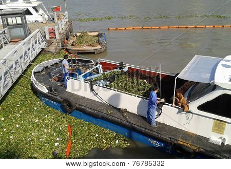 Clearing Huangpu River Shanghai China of Water Hyacinth