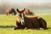 foto of pony  - Pony in the meadow on a sunny autumn day - JPG