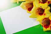 pic of gladiolus  - beautiful yellow gladiolus on a green background - JPG