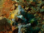 pic of slug  - The surprising underwater world of the Bali basin - JPG