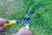 foto of grass-cutter  - Scissors cut grass put in garden during cut - JPG