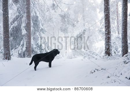 Dog Free in Forest
