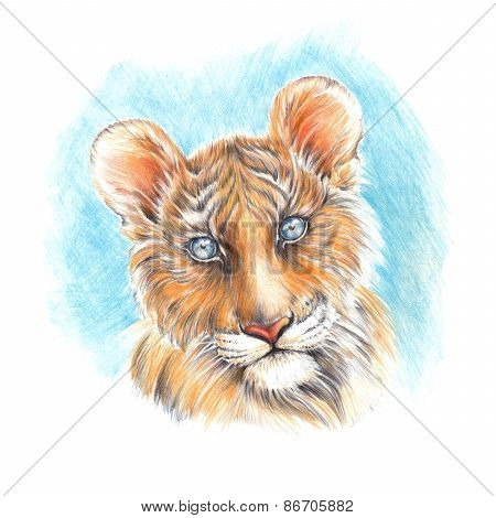 Handmade Painting Colored Pencils Head Cute Tiger Cub