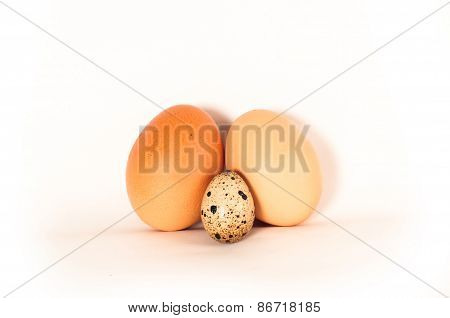 Tree Egg Different Types