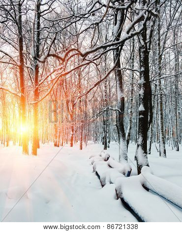 sun's rays, winter dawn in the forest