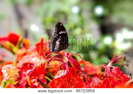 Tropical Butterfly In The Garden