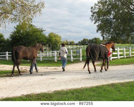 horses walking
