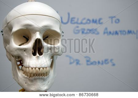 Dr. Bones Gross Anatomy