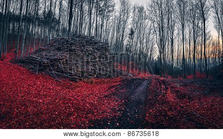 Pile Of Wood Near A Path In The Forest With Red Leaves