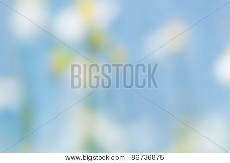 blurred flowers with blue sky; de-focused