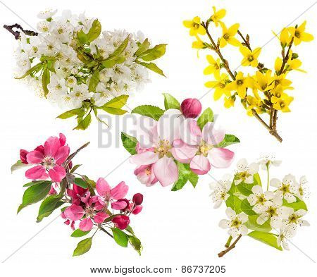 Blossoms Of Apple And Pear Tree, Cherry Twig. Spring Flowers