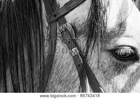 Bridle and Horse's Head