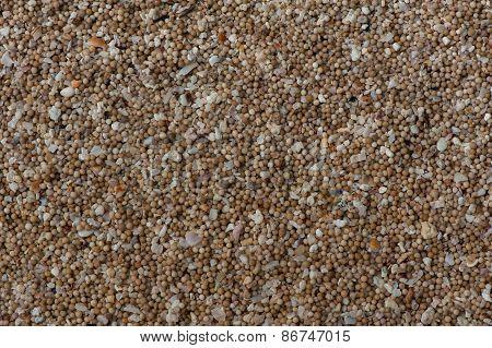 Sand Of Coral  Flinders