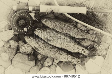 Traditional Vintage Trout Fishing