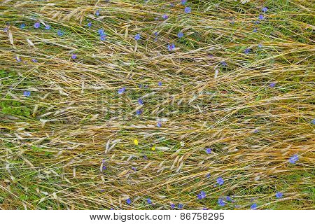 Annual Plants Floral Covering Of Farm Field