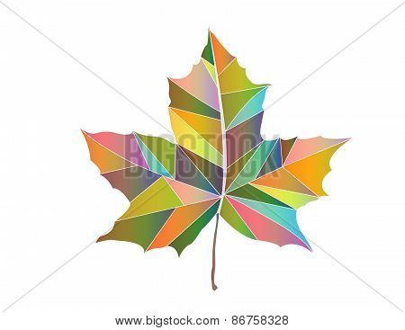 Maple-leaf Colored Triangles