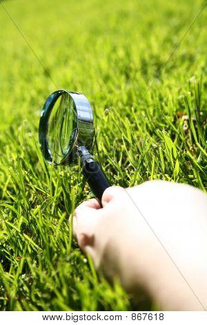 Inspeccione la hierba