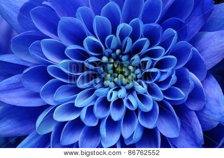 Close up of blue flower