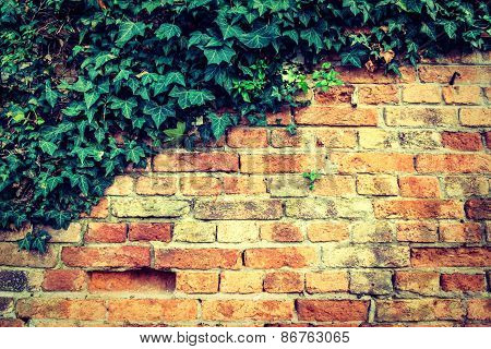Part Of Old Ancient Wall With Green Leafs