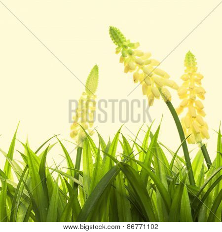 Nature spring or summer background