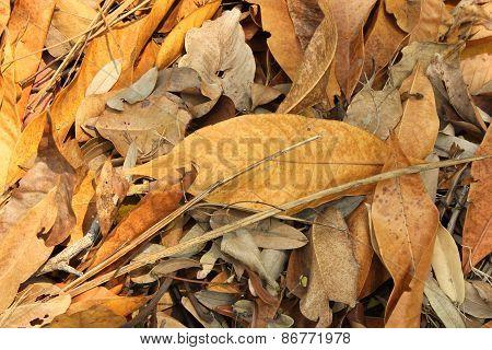Leaf Debris On The Forest Floor