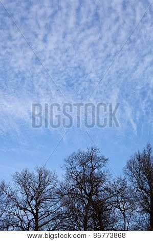 Black Leafless Trees Silhouettes Over Blue Sky With Clouds