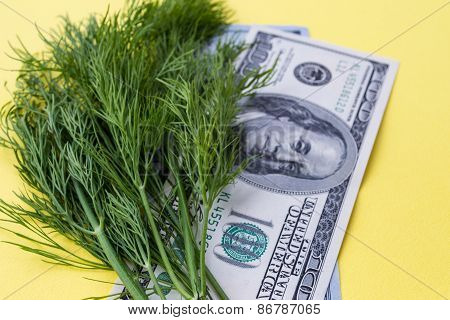 Greenery dill and 100 dollars on yellow background