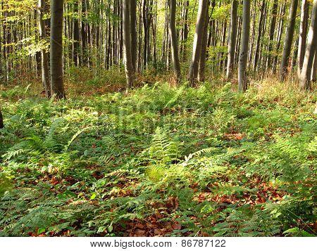 fern in wood