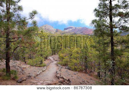 Scenic Hiking trail