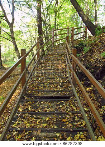 broken wooden footbridge