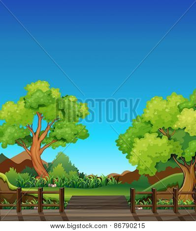 Forest at daytime with bridge