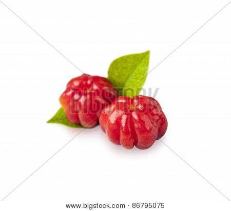Suriname Cherry, The Tropical Fruit