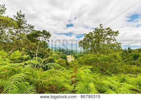 Tana Toraja Landscape And Fern Forest