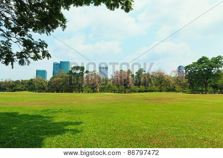 Lawn In The Park